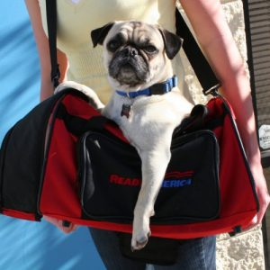 Small-Dog-Evacuation-Kit
